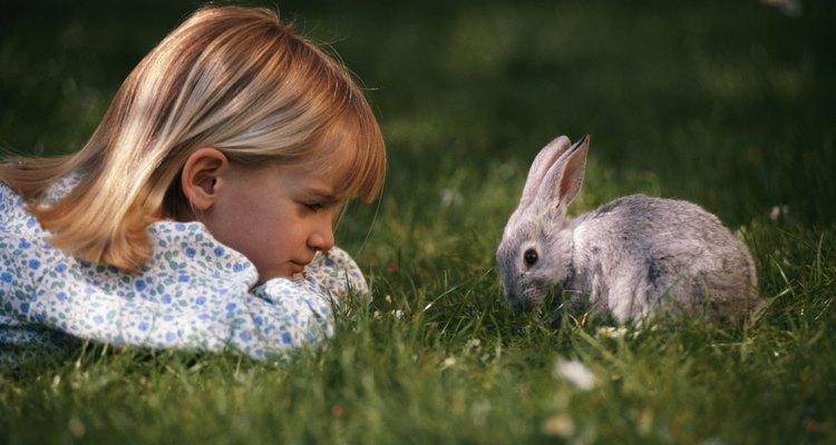 Los conejos son una mascota popular.
