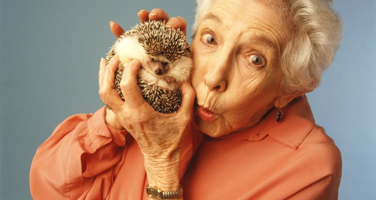 Hedgehog owners will find that their pet can eat just about anything they can.