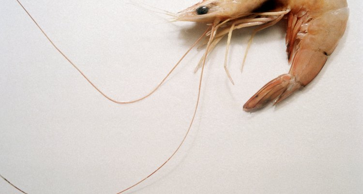 Learn how to identify spoiled shrimp.