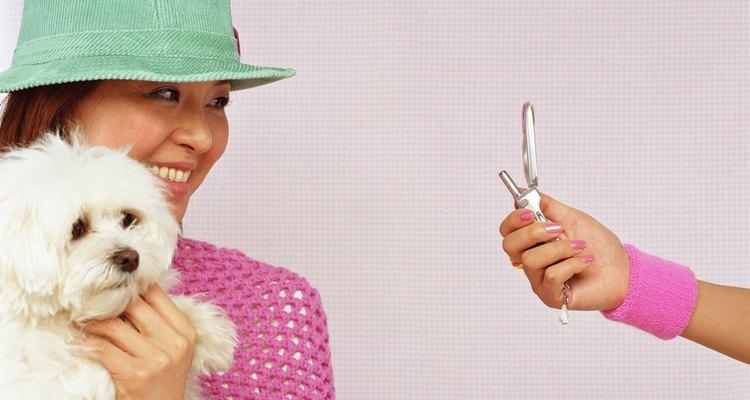 Mujer con un perro maltipoo.