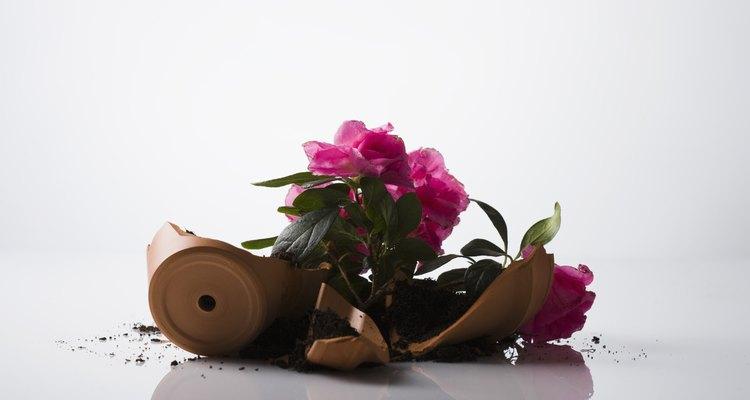 Um ladrão virará um vaso de flores e encontrará a chave reserva rapidamente