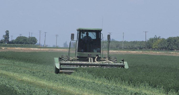 La alfalfa es una lengumbre.