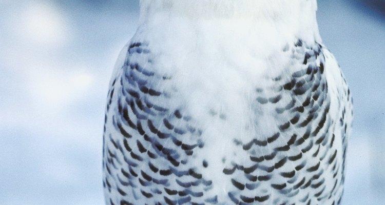 Aves e mamíferos compartilham algumas características