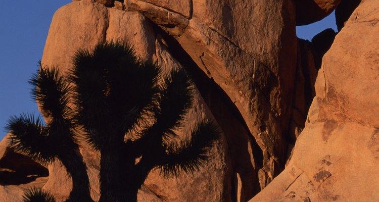 Joshua Tree National Park es famoso por sus rocas de escalada y el búlder como lo es por sus extraños árboles.