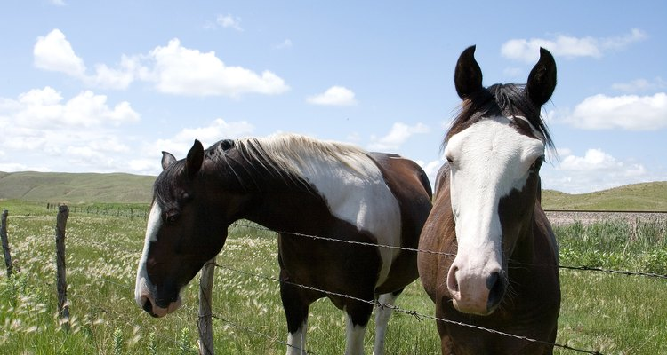 There are many vegetables that horses can safely eat.