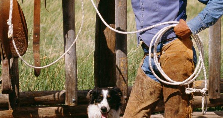 Determine se o seu cão é um pastor ou um caçador