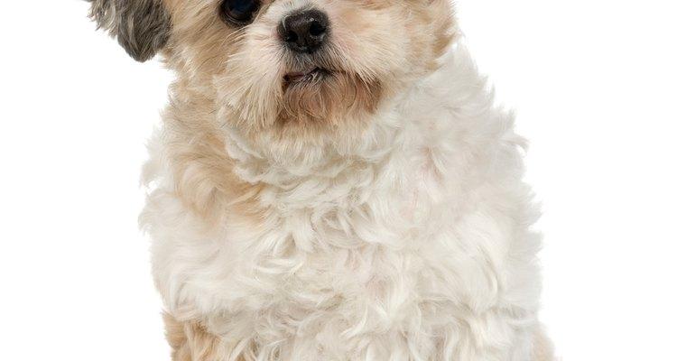 Los perros muy pequeños generalmente son alentados a usar una pequeña litera canina.