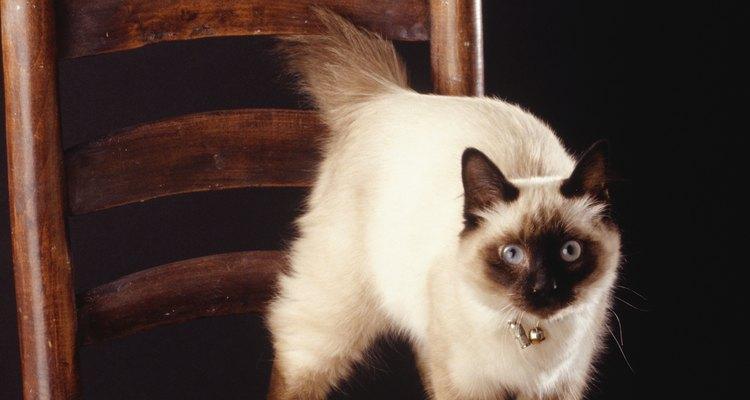 En muchas otras razas, los ojos azules pueden ser señal de sordera.
