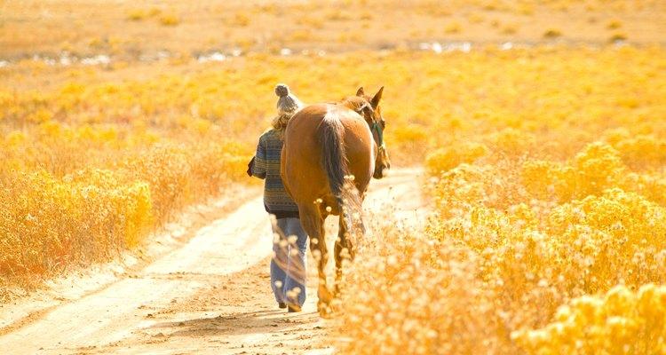 Uma caminhada com seu cavalo é um ótimo modo de construir uma relação