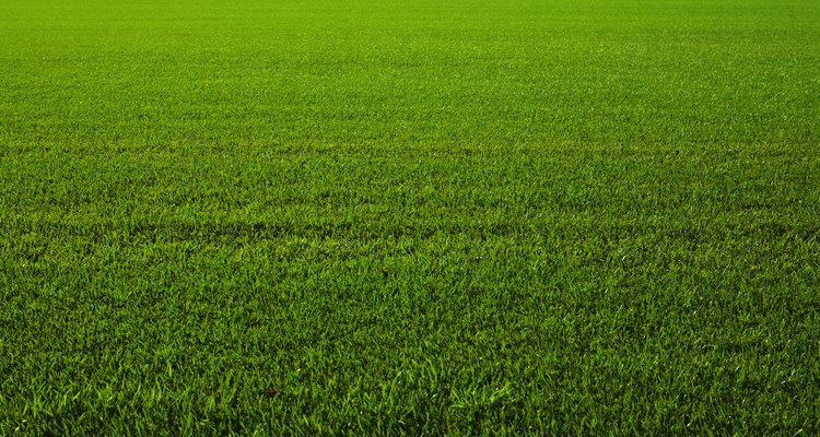 Estabilizar o gramado novo antes de cortá-lo mantém a grama verde