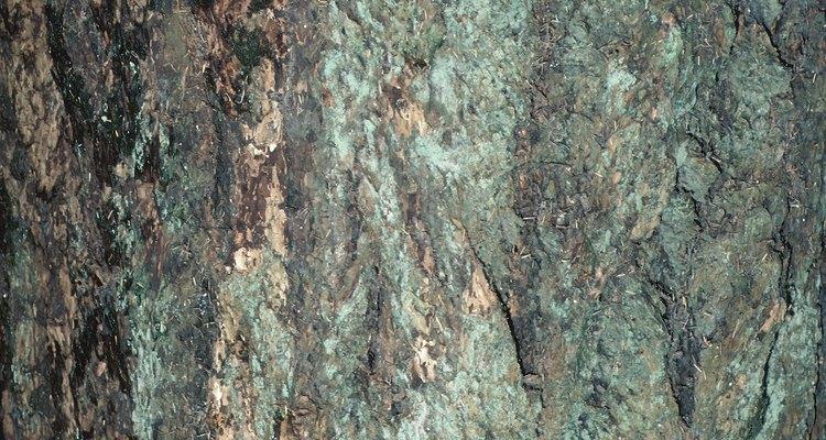 Líquenes de varios tipos y colores adornan los troncos de los árboles.