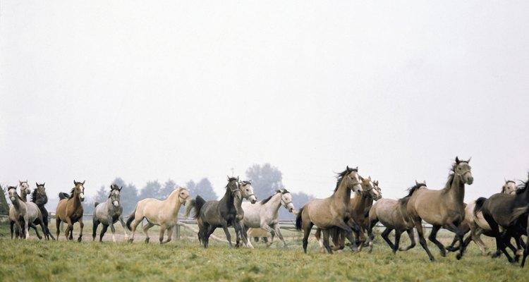Los caballos muestran agitación e inquietud antes de un desastre natural.