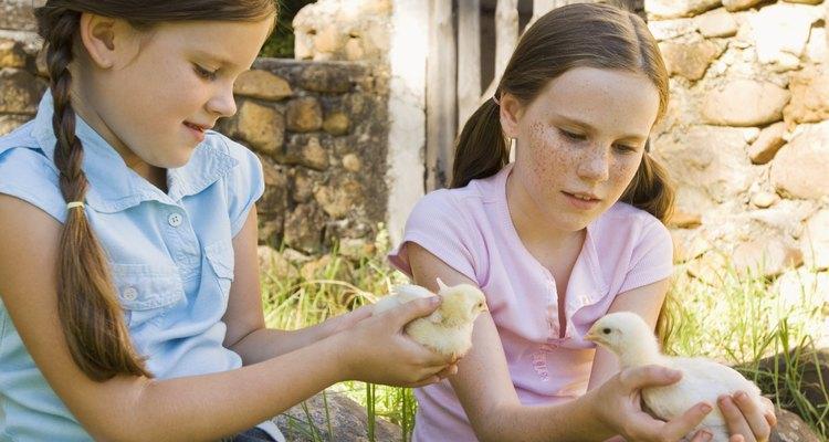 Si encuentras que tu ave se rompió una pata, puedes colocarle una férula provisional.