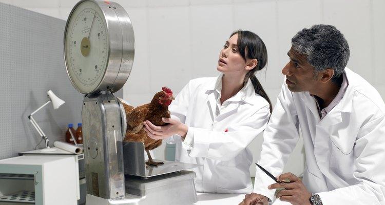 Los profesionales de la biología encuentran a la tercera mayor perspectiva de sueldo como asociados de investigación clínica.