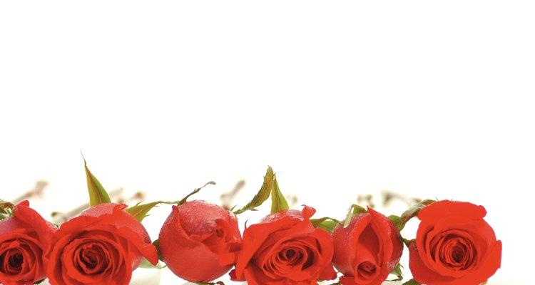 Mergulhar em cera estende a vida das rosas.
