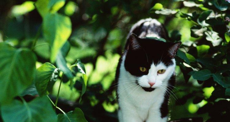 Aprenda a tirar seu gato de uma árvore