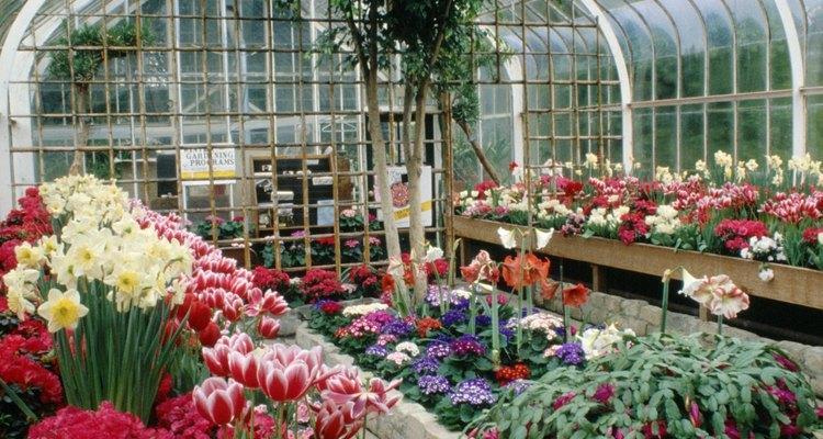 Las flores plantadas en otoño florecerán en invierno o a principios de primavera.