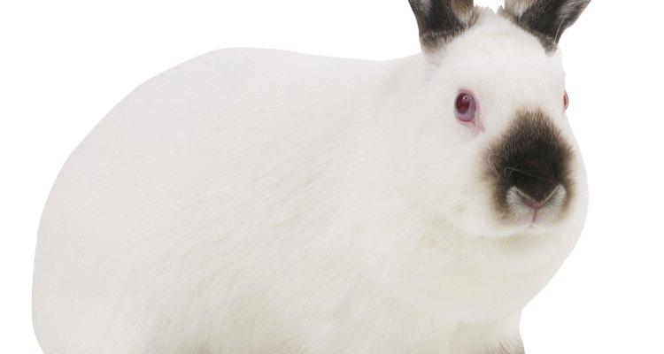 Los conejos son conocidos por su rapidez y agilidad.