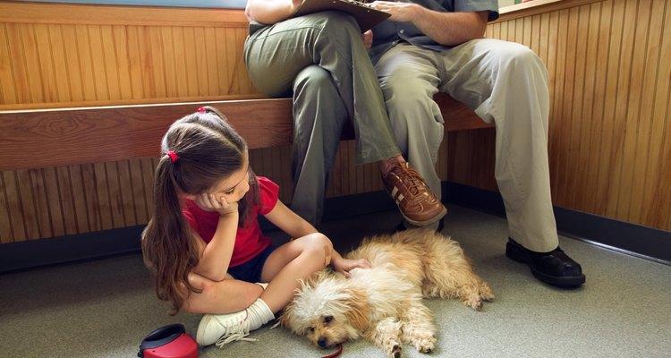 Cosequin puede causar malestar en algunos perros.