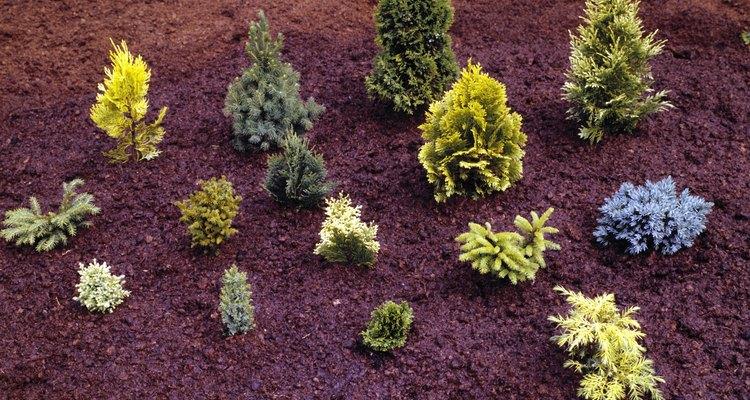 Plantar o número certo de plantas em um canteiro de jardim é importante para prevenir uma superlotação