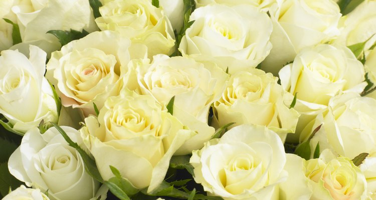 Bunch Of Cream Roses