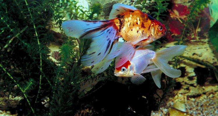 Las típicas plantas acuáticas son plantas de tallo, rosetas y helechos.