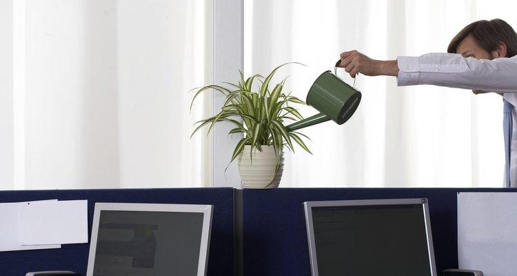 Evite molhar as folhagens quando regar sua orquídea