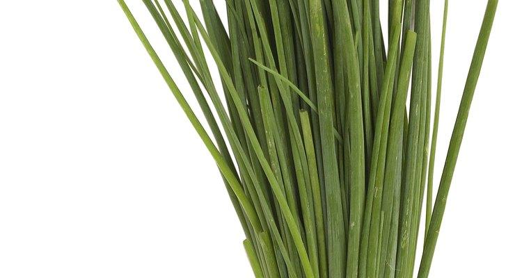 Los cebollinos se relacionan con las cebollas y el ajo y tienen un sabor ligero y sabroso.