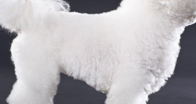 As máquinas de tosa são importantes para cuidar adequadamente do pelo do seu cão