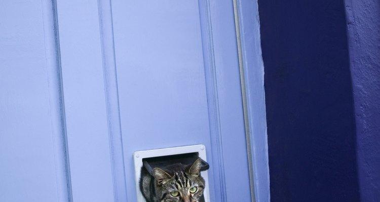 No olvides que los gatos son depredadores.