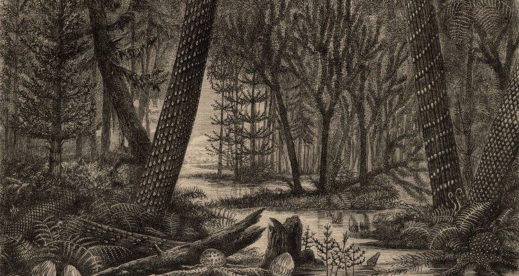 La concepción de un artista del periodo carbonífero muestra una flora característica.