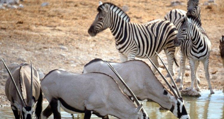 Los animales de las praderas de África viven en un balance delicado.
