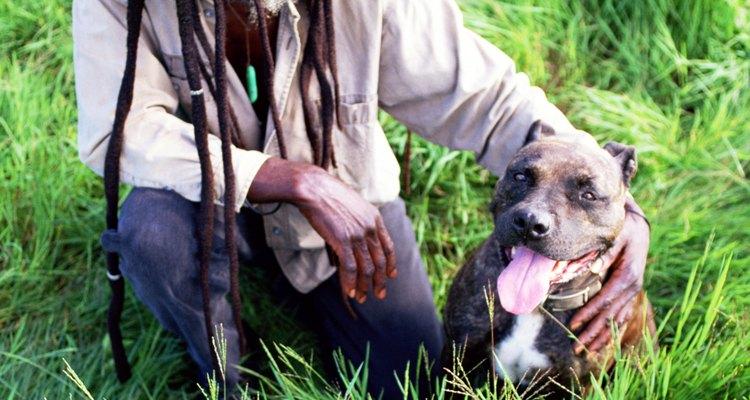 Los pit bulls pueden ser muy cariñosos.