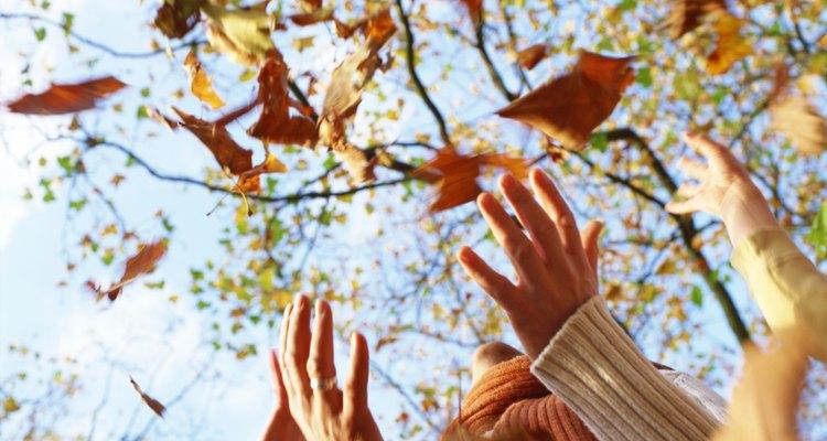 As folhas que caiem nessa samambaia se decompõe e fornecem nutrientes