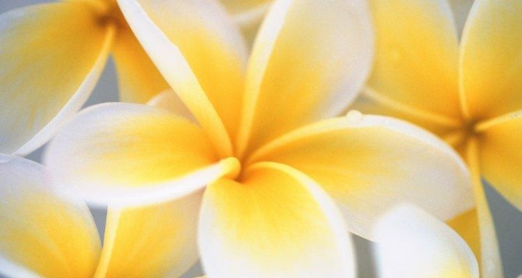 Existen una gran variedad de flores altamente tóxicas.