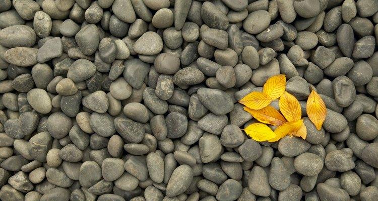 Las rocas pequeñas le agregan contraste a los pétalos vibrantes y suaves.