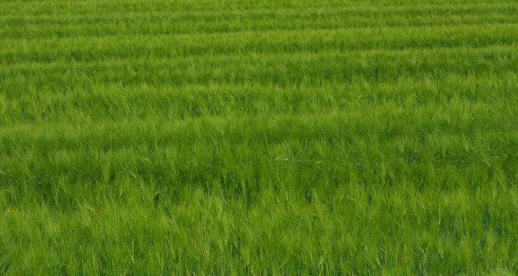 Cortes precisos no tapete de grama evitam danos no gramado