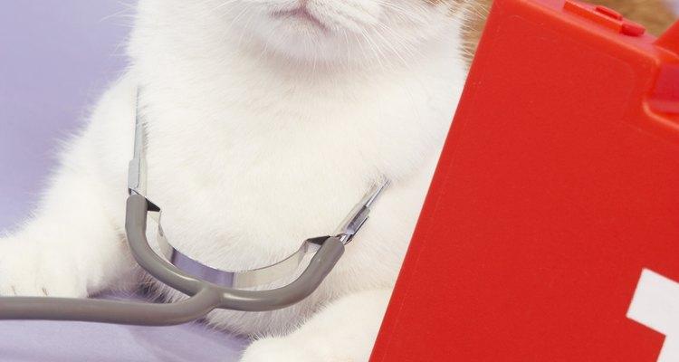 Cuide bem do seu gato para ele não ter uma infecção severa