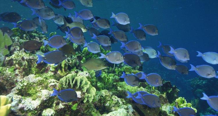 Las algas desempeñan un papel importante en los ecosistemas del mundo.