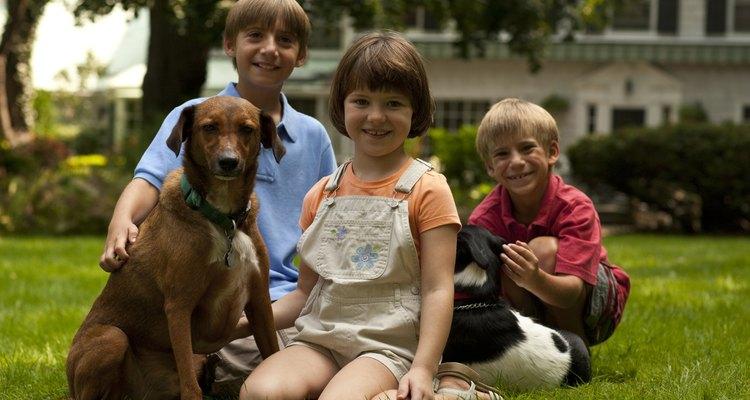 Las mascotas forman parte de una familia.