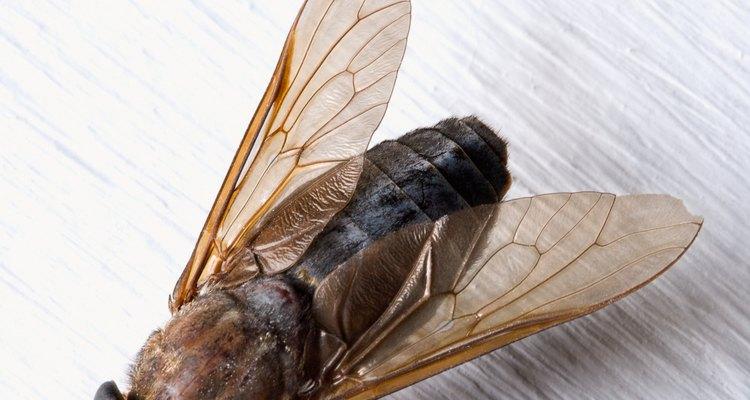 Los pequeños insectos pueden ser una molestia regular en tu hogar.