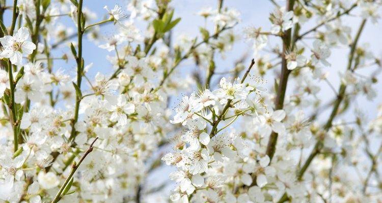 La mayoría de árboles frutales necesitan sol pleno para prosperar y producir frutos.