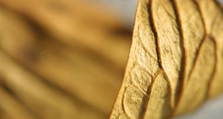 Puedes utilizar una prensa botánica para preservar hojas, flores, hierbas y pastos en forma seca.