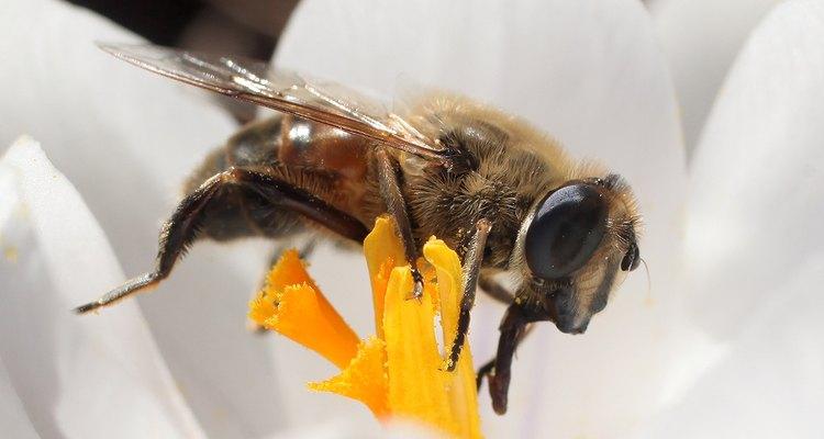 Las abejas y otros polinizadores llevan el polen entre las flores, que ayudan en la reproducción de las plantas.