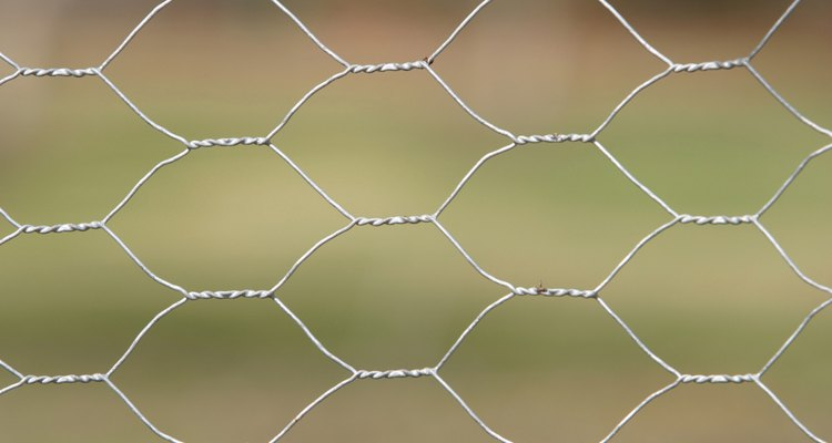 Fill gaps under your fencing with chicken wire.