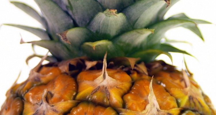 Las plantas de piña no viven mucho tiempo.