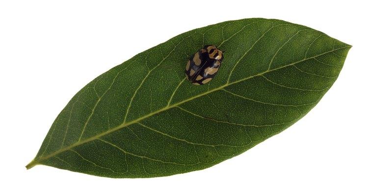 Los insectos pueden ser controlados con los derivados del nim.