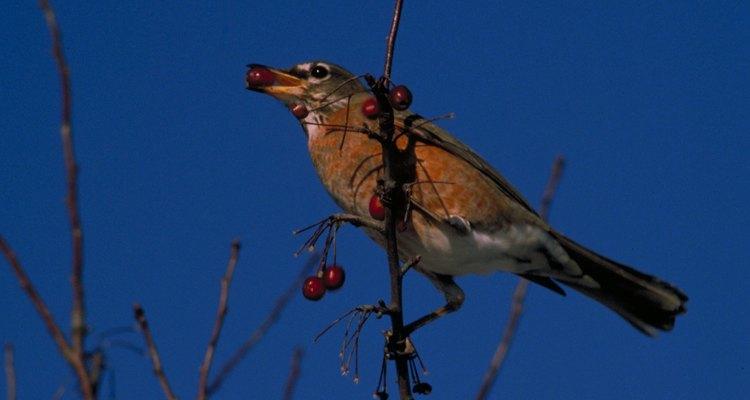 Un pájaro se posa en una rama cargando bayas de color naranja.