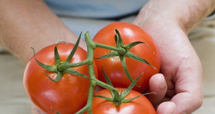 Siempre revisa un tomate antes de usarlo.