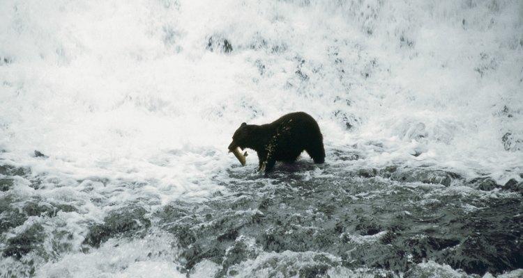 Las aguas interiores de Alaska están frías durante gran parte del año y pueden atraer peces y animales asociados a las regiones árticas.